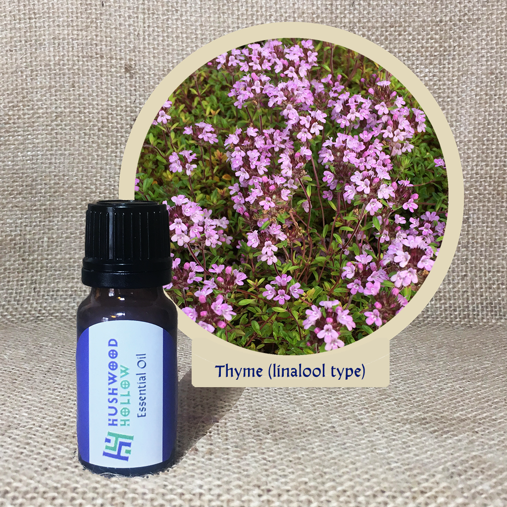 Thyme (linalool type) – Pure Therapeutic Grade Essential Oil via @chooicenz