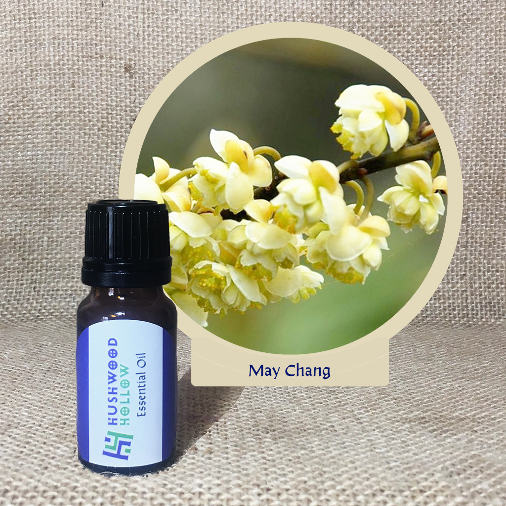 May Chang – Pure Therapeutic Grade Essential Oil via @chooicenz